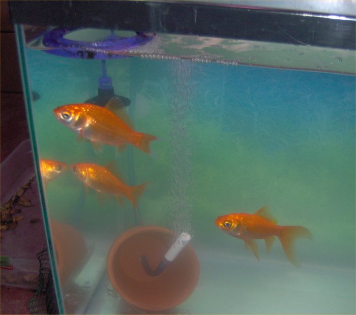 Freshwater fish tank maintenance has cloudy water 2017 for How to fix a cloudy fish tank