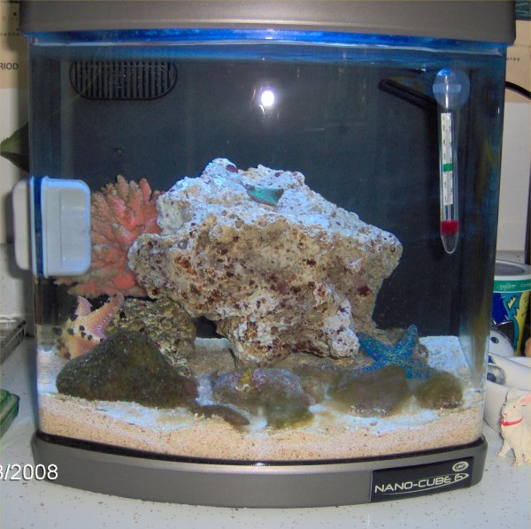 Saltwater fish 6 gallon tank fluval edge 6 gallon nano for Saltwater fish for 10 gallon tank