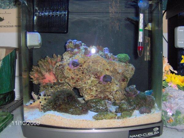 Saltwater fish 6 gallon tank fluval edge 6 gallon nano for 10 gallon fish tank for sale