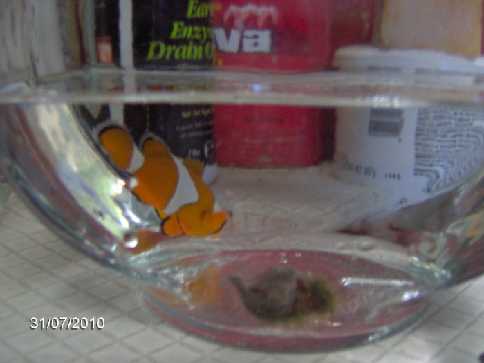 how to clean shells to put in a fish tank