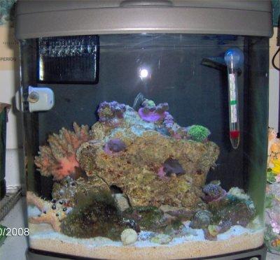 Robyn S Six Gallon Nano Reef
