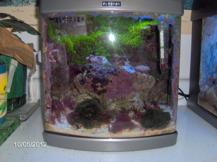 Robyn 39 s 6 gallon reef photo page for Fish tank rock cleaner