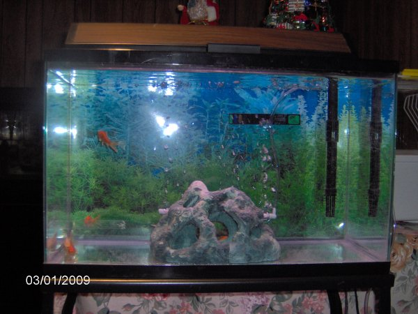 30 gallon fish tank how many goldfish 2017 fish tank for Fish for a 10 gallon tank