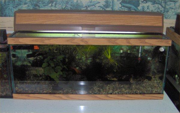 Robyn 39 s 20 gallon aquarium page for Fish tank 20 gallon