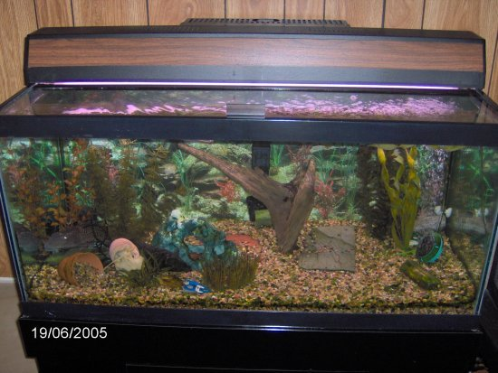 Pin the 40 gallon tank set up on pinterest for How to clean a 10 gallon fish tank