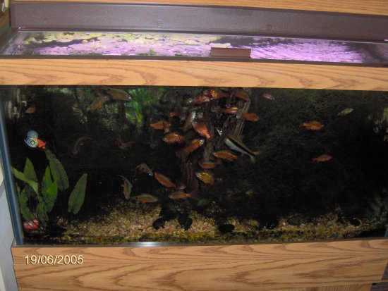 50 gallon aquarium gallery for 50 gallon fish tank