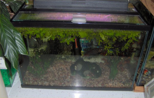 Eclipse 20 gallon fish tank offers a larger size for 20 gallon fish tank size