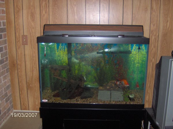 Robyn 39 s 65 gallon tank defect page for 65 gallon fish tank