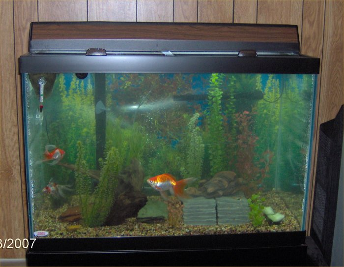 fish tank 40 gallon gallon aquarium and stand 60 gallon. Black Bedroom Furniture Sets. Home Design Ideas
