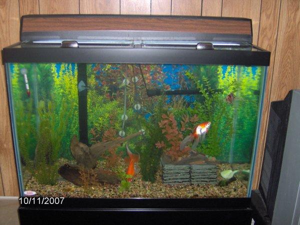 Robyn 39 s 65 gallon aquarium page for Good fish for 10 gallon tank