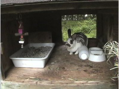 Robyn S Rabbit Hutch Page