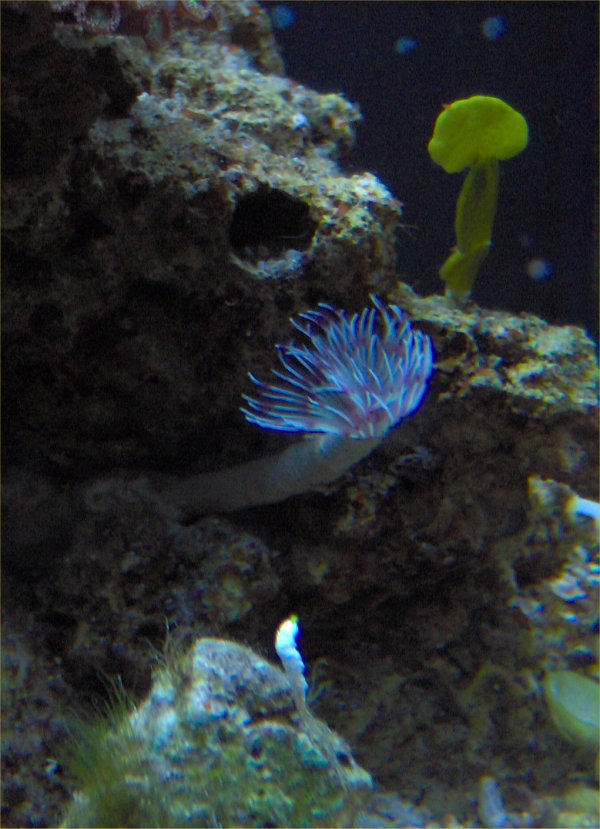 Feather Duster Worm Baby Robyn's Fea...