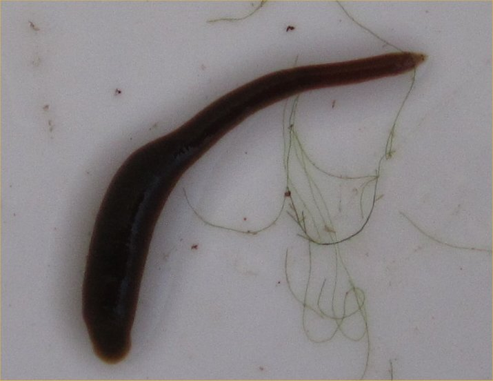 Robyn's Worm Page