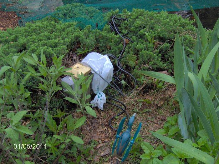 Robyn 39 S Pond Blog July 2011