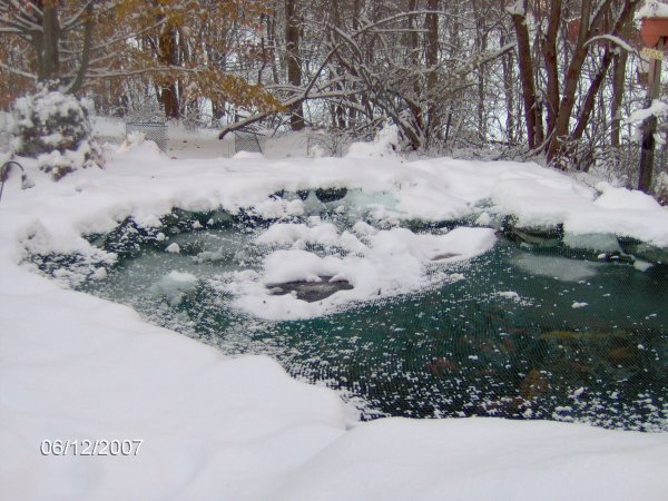 Backyard Pond Fish In Winter : Robyns Winter Pond Pictures Page