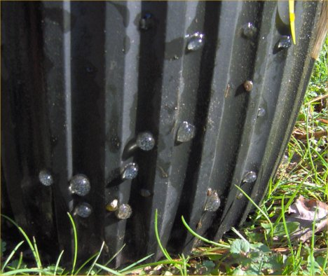Snail eggs on a two gallon Leriopot; they are black ramshorn snails.