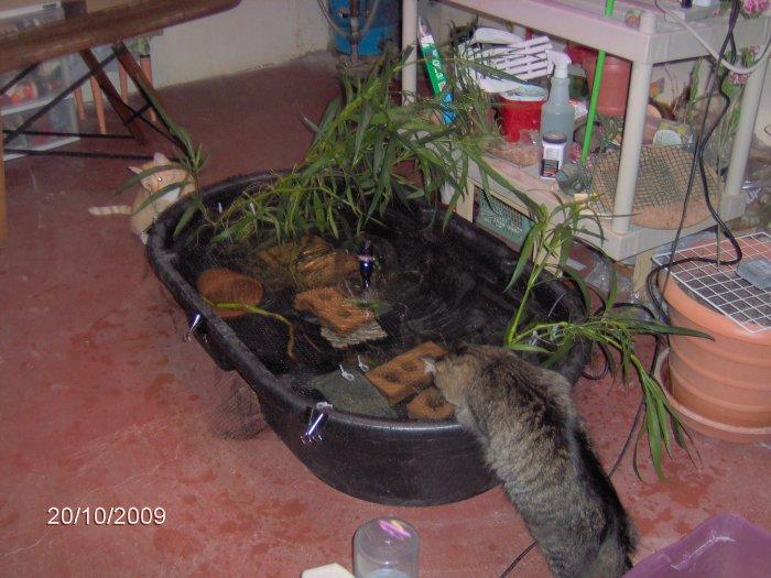 Barney 39 s page for Bathtub fish pond