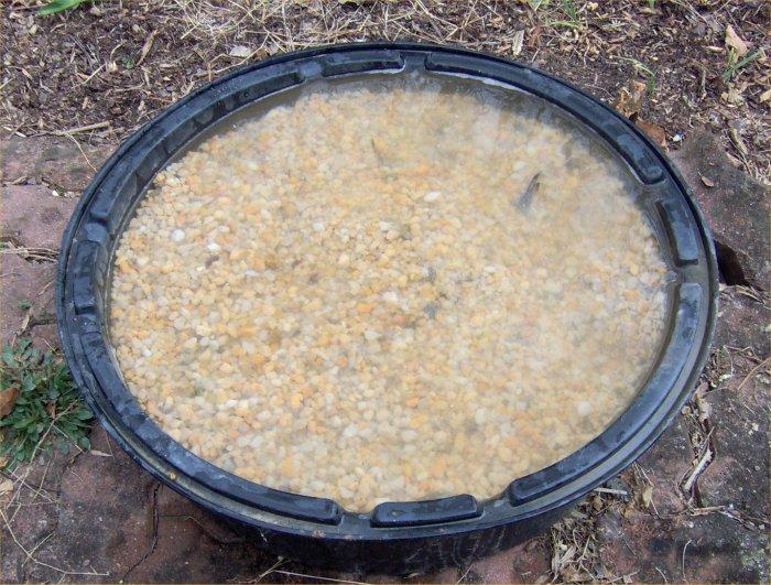 Robyn 39 S Pond Blog March 2012