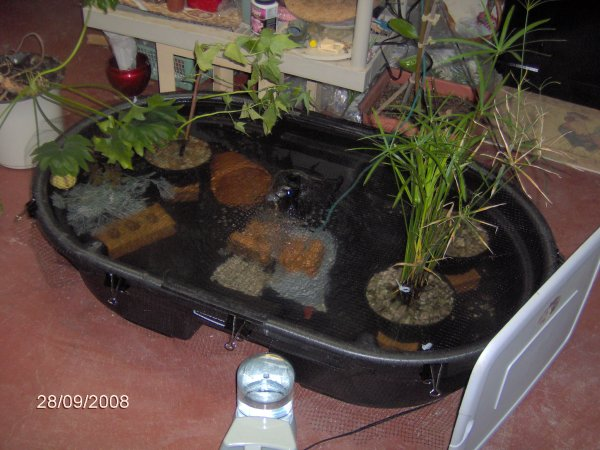 The Gallery For Indoor Koi Pond Kit
