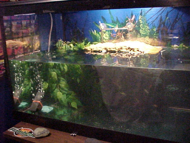 Turtle Tank - for the Well Being of Your Turtles