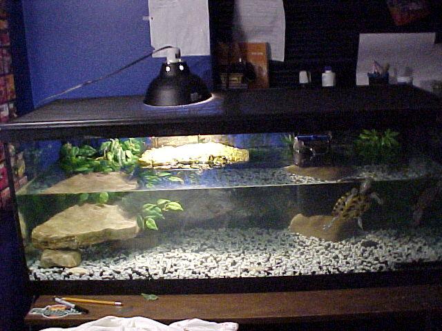 Small+Turtle+Tanks Small Turtle Tanks