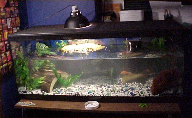 how to clean turtle tank gravel