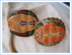 Robyn's Painted Turtle Page