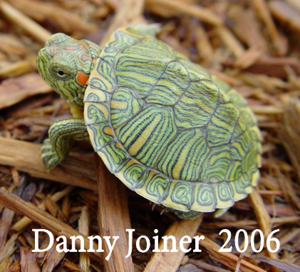 Hatchling Turtle Photos,Bleeding Heart Flower Tattoo Meaning