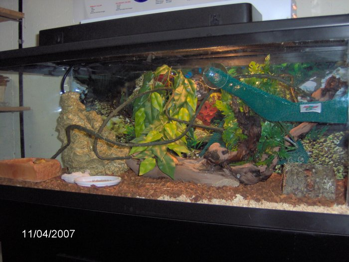 60 gallon reptile tank for How many fish in a 20 gallon tank