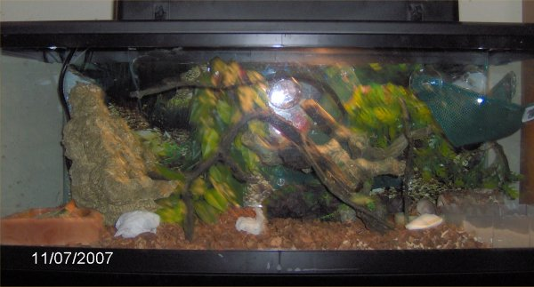 how to set up a carpet snake tank