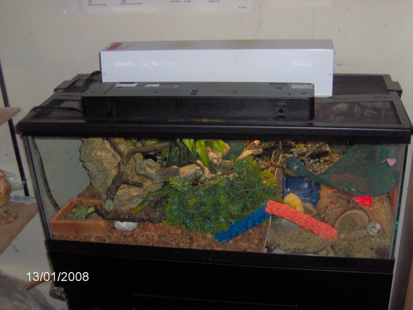 Robyn 39 s hermit crab page for 20 gallon fish tank dimensions