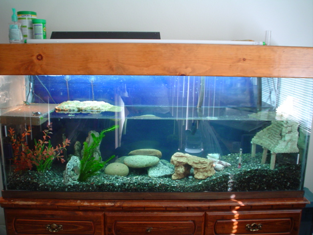 100 gallon turtle tank - a baby turtle is onthe far left