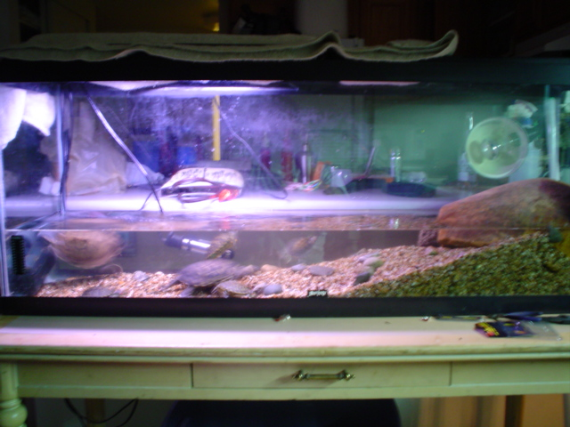 Turtle tank 55 gallon turtle tanks 2017 fish tank for 55 gallon fish tank for sale