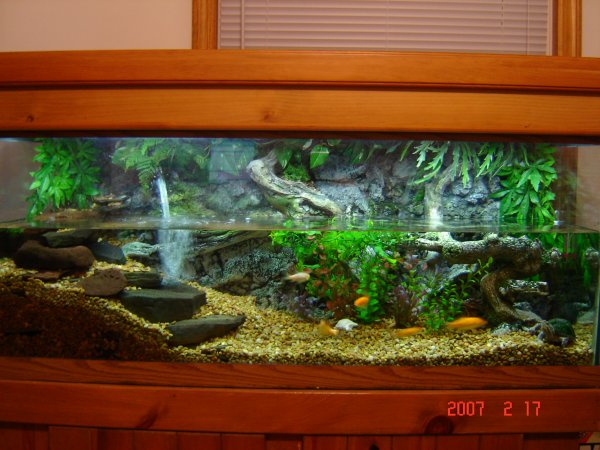 75 gallon turtle tank - note the turtle at thebottom right