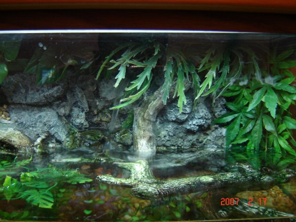 Aquarium with waterfall pictures for Aquarium waterfall decoration