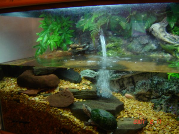 Turtle with fish aquarium small turtle aquarium 2017 for Aquarium waterfall decoration