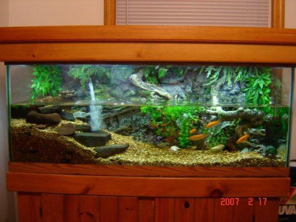 Pet Turtles Cages 75 gallon turtle tank