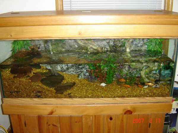 75 Gallon Turtle Tank Pictures to pin on Pinterest