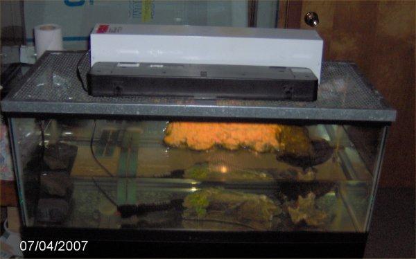 Turtle Tank Setup 20 Gallon Turtle Aquarium Update 10