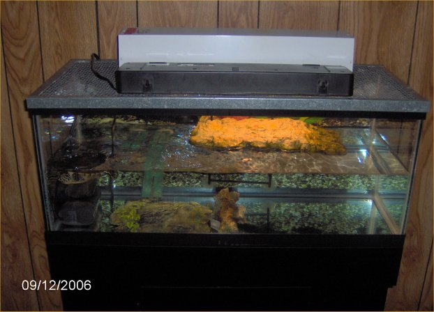 Robyn S Turtle Tank Page