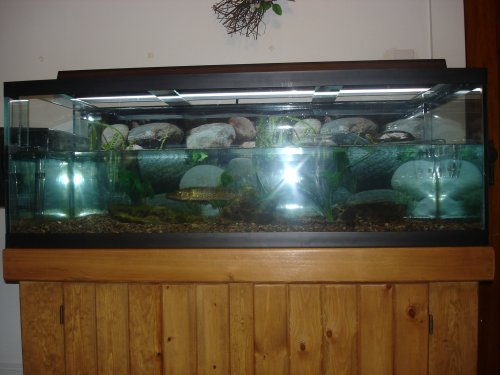 Aquatic Turtle Tanks Car Interior Design