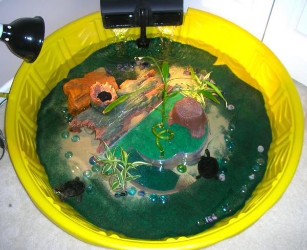 Love this pond turtle pinterest Diy indoor turtle pond